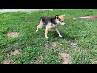 Видео от Приют для бездомных животных г. Первоуральск
