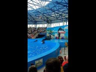 Дельфинарий Сочи Парк.mp4