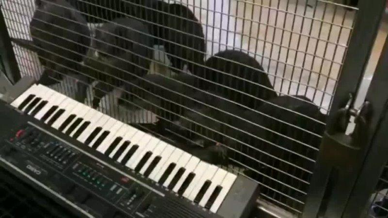 Как создавался Vamp Anthem