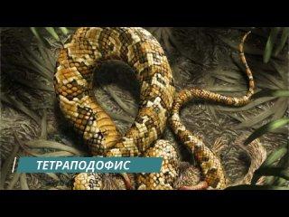 [Упоротый Палеонтолог] СТРАННЫЕ ВЫМЕРШИЕ ЖИВОТНЫЕ: змея с четырьмя ногами, лягушка-крокодил и новая попытка сухопутности