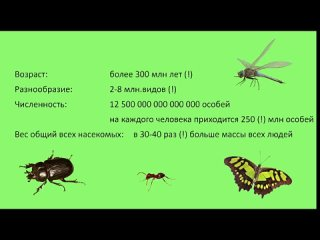 Insects World ‐ Made with