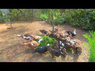 Видео от Ласточкино гнездо