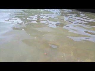 Видео от НОВОСТИ   КРАСНОДАР   БЛОКНОТ