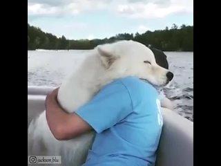 Животные тоже любят обниматься