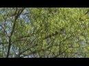 «побеги. тропа» фильм Тони Комаровой