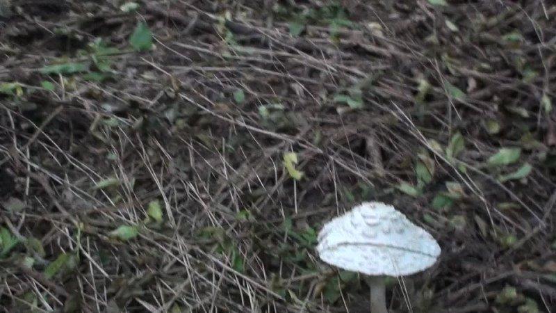 Видео от Abrau antiqua