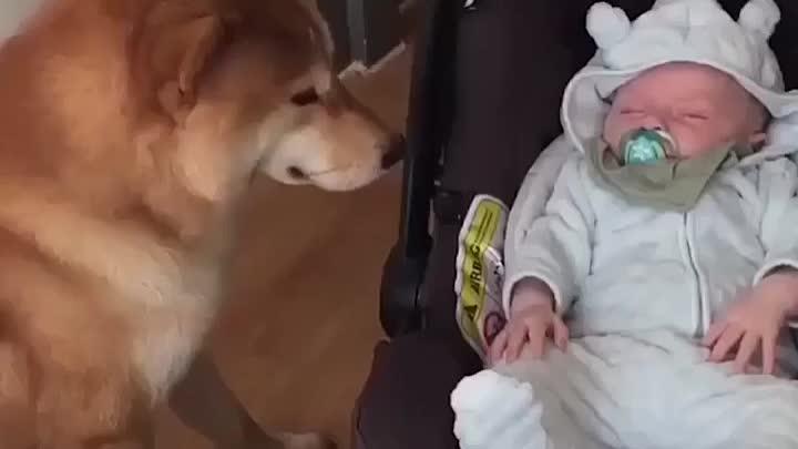 Собака-лучший друг человека