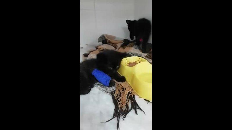 Видео от Ольги Ивановой