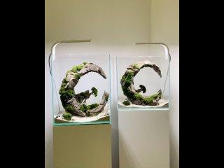 Видео от AQUA MANIAC  - аквариумы, рыбки, растения