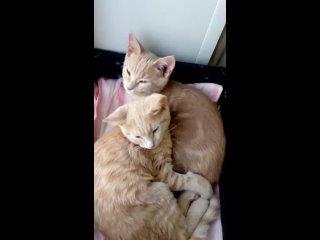 Котята Тед и Том