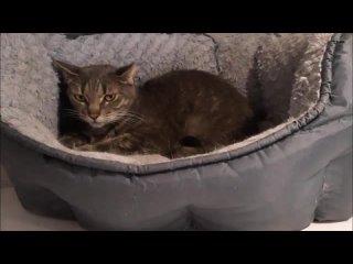 Video by Помощь животным-инвалидам и возрастным животным