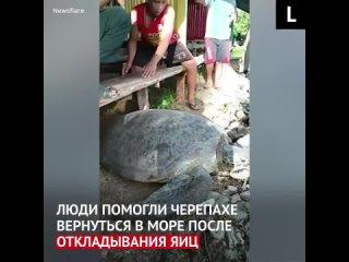 Филиппинцы помогают черепахе вернуться в море