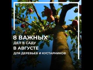 video_3091487_5309519