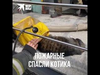 Пожарные реанимировали кошку, спасенную из горящей квартиры в Петербурге