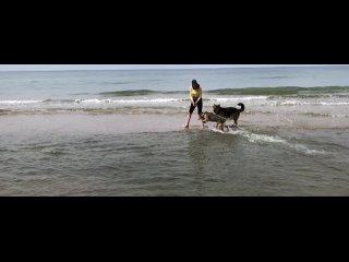 Передержка хвостиков kullanıcısından video