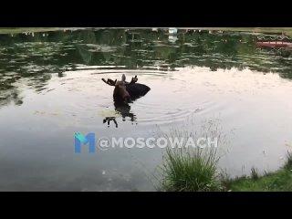 ЛОСОСЬ - ЛОСЬ.