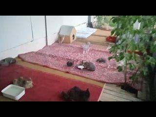 Кошкин дом kullanıcısından video
