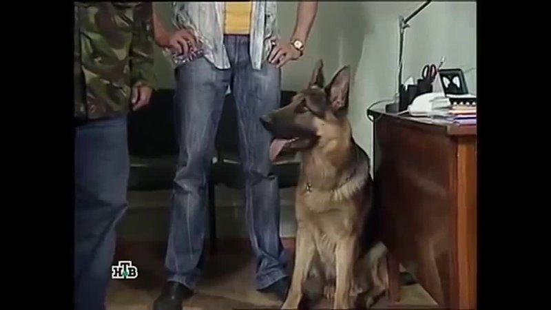 Возвращение Мухтара 5 сезон 42 серия Банкрот