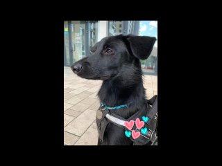 Парень купил черного щенка лабрадора, но в будущем его ожидал сюрприз.