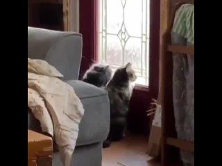 Кошки могут быть разные, но любим мы и одинаково...