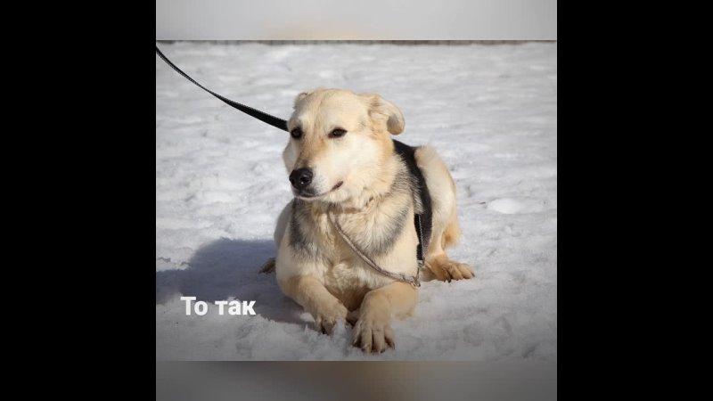 Видео от Взять собаку Please adopt me Moscow