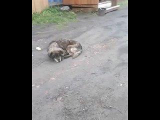 Видео от Защита  животных в Петропавловске (РК)