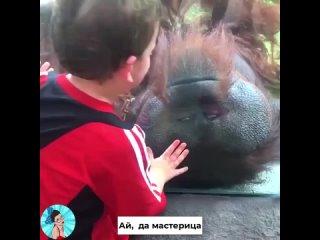 Такие похожие на людей обезьянки