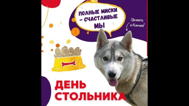 День стольника Помощь хаски собака