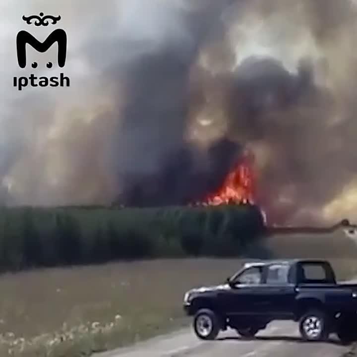 В Альметьевске сгорело 5,5 тысяч кв.м. леса.