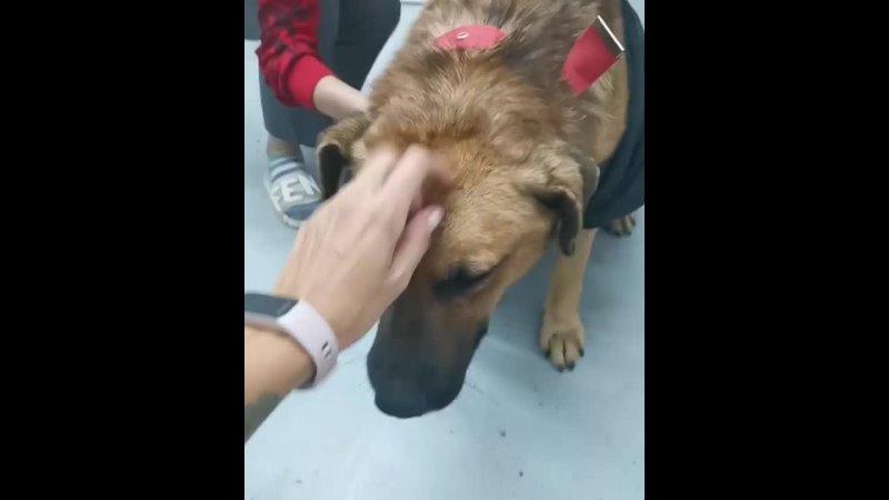 Видео от Информационный Центр Животные в ЧС