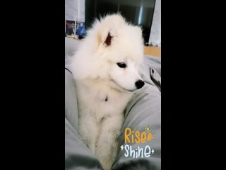 Video by Svetlana Ufimtseva