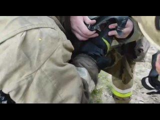 в Новом Уренгое пожарные спасли кошку