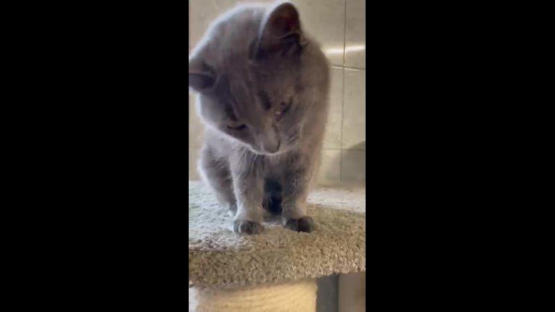 Видео от Преданное сердце Помощь животным