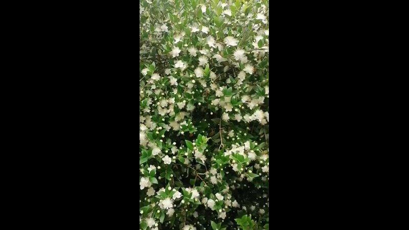 Видео от Парк Дендрарий в Сочи