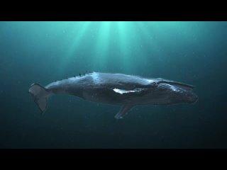 Горбатый кит в море
