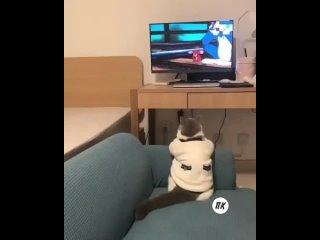 Видео от МСТ телеком