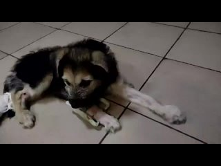 Cлужба по контролю за безнадзорными животными kullanıcısından video