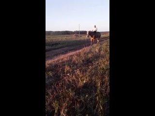 Video by Спасение и помощь лошадям