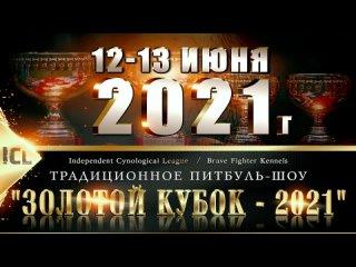 """Питбуль-шоу """"Золотой Кубок - 2021"""""""