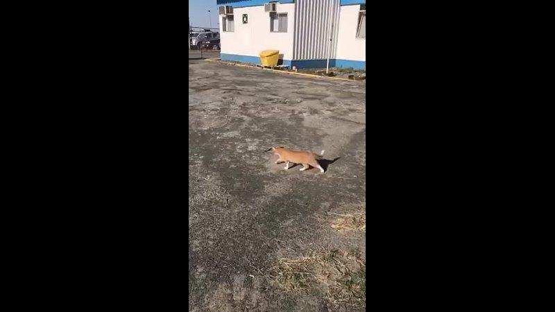 Видео от Игоря Гердта
