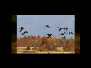 Видео от Ларисы Некрасовой