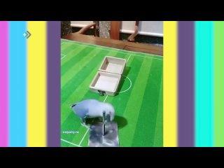 Студия 11 - Умный попугай