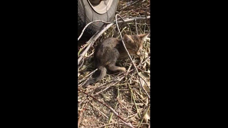 Видео от ДОБРОЕ СЕРДЦЕ г Зеленогорск Помощь животным