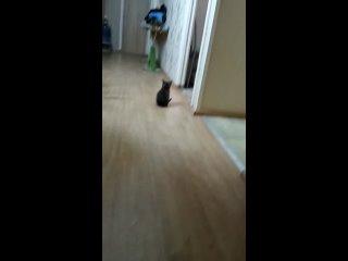 Видео от Кошкин нос (приют для кошек Воркута)