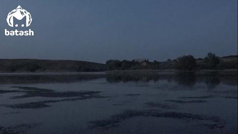 В Башкирии чиновники запустили рыбу в реку а на следующее утро она всплыла брюхом кверху