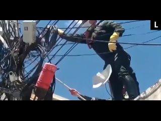 Полиция спасла опоссума, запутавшегося в электросетях