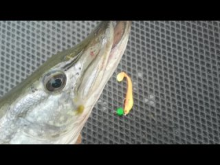 Video by Константин Андропов - рыбалка и около