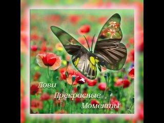 Video by Viktoria Belyanskaya