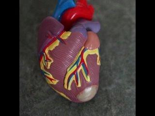 Установлена полезная для сердца доза алкоголя.mp4