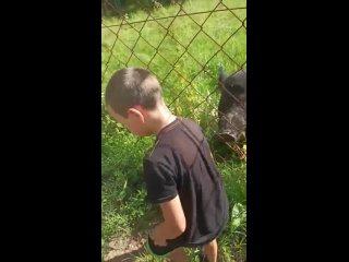 Видео от Андрея Бузакова